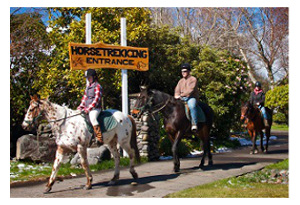 HORSETREKKING AT Ruapehu Homestead