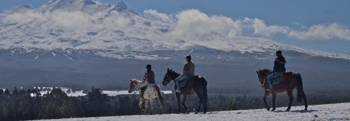 Horse treks AT Ruapehu Homestead mountain trek picture