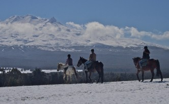 Horse treks AT Ruapehu Homestead mountain trek picture